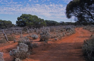 AB Bush track and old sheep fencing near Whyalla