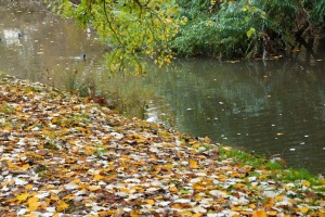 AH Early winter leaves on the river bank