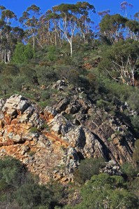 AB Typical sandstone and eucalypt bushland within the park