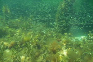 A school of baitfish congregate below the jetty