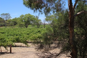 AG Open bushland and vines