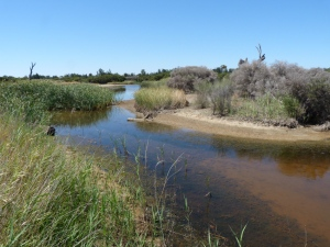 5 Typical wetland  habitat