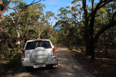 Bush track surrounded by eucalypt forest near the park entrance