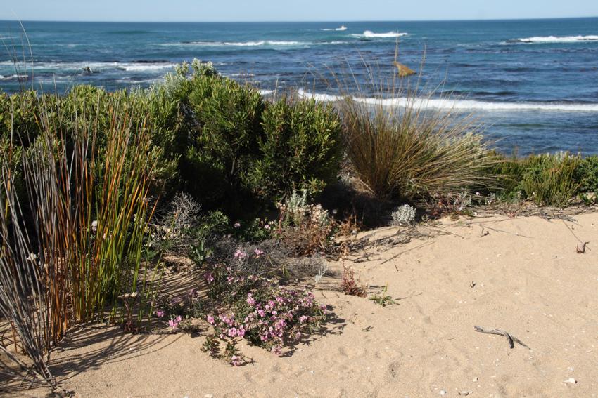 The edge of a coastal dune