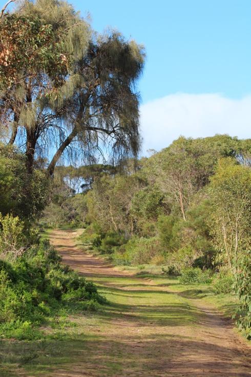 3 coastal scrub dominated by wattles and casuarina trees