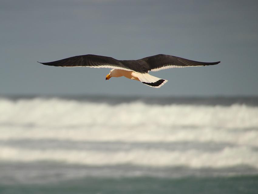 Waitpinga Scrub And Surf Naturally South Australia