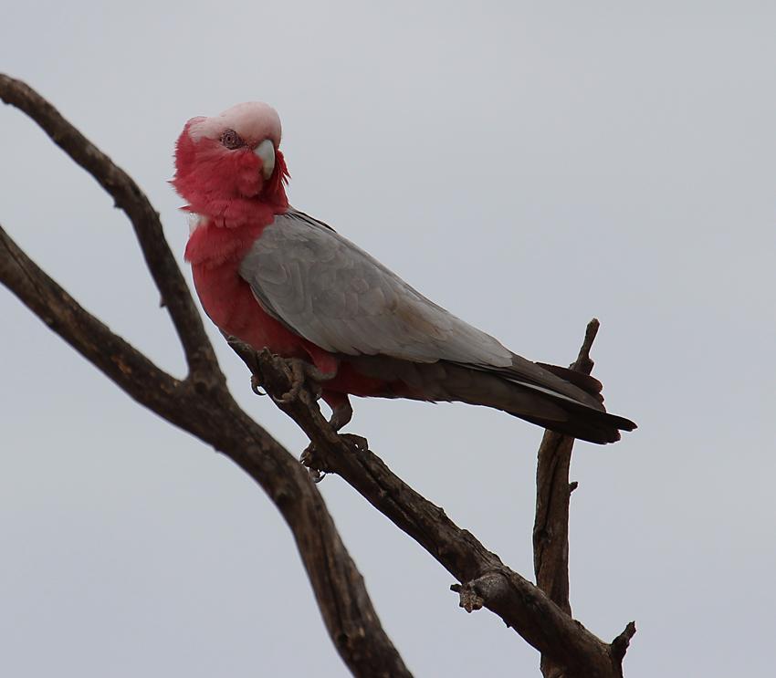 2 Cockatoo near the park's entrance