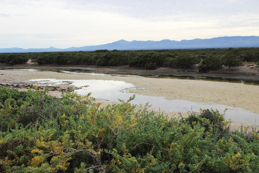 5 The creek at low tide with mangrove forest and Flinders Ranges in the background
