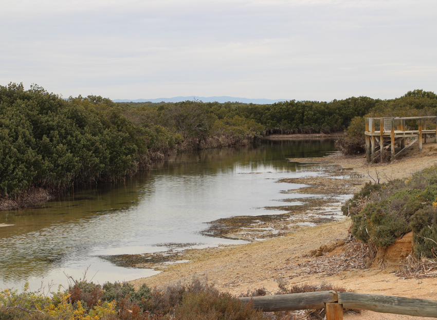 6 Chinaman's creek jetty at low tide