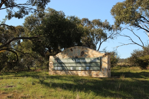 2 mallee box gums